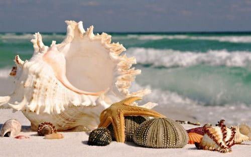 Sea Shell Crafts Lovely Ideas Viral Rang