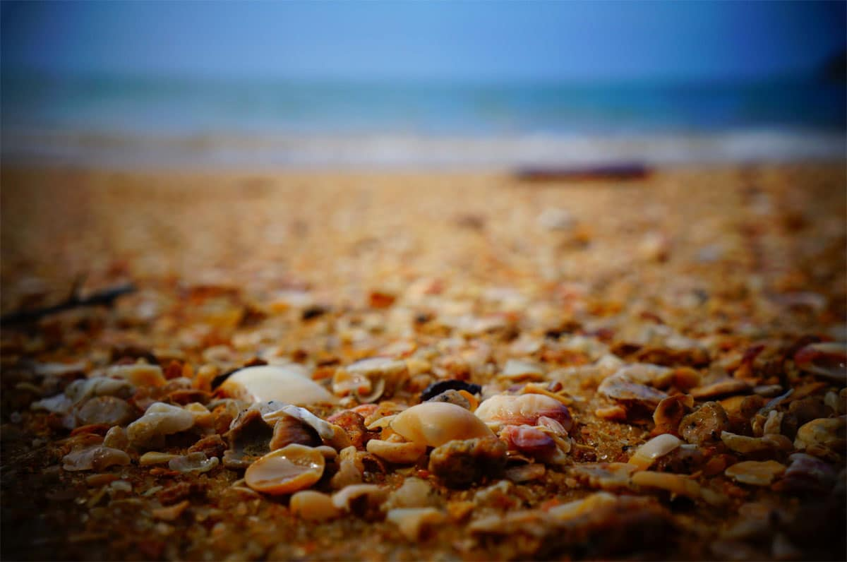 Sea shell are available in many craft or souvenir stores, or in the craft section of your favorite department store. Or you can take a trip to the beach and gather the shells yourself! A stroll alongside the ocean will yield many pretty