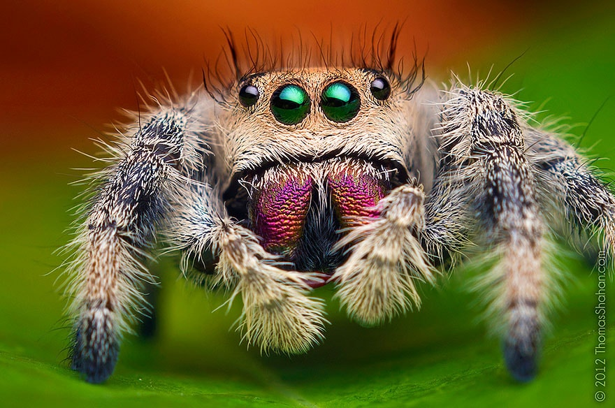 Spiders Looking Cute2