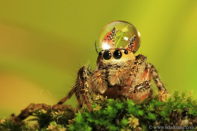 Spiders Looking Cute3