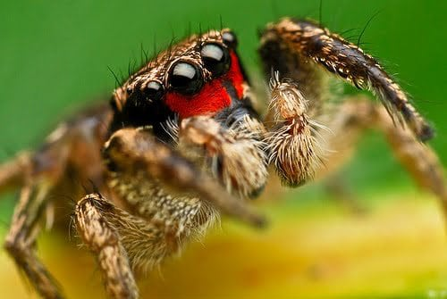 Spiders Looking Cute4