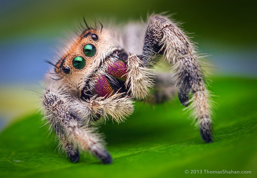 Spiders Looking Cute5