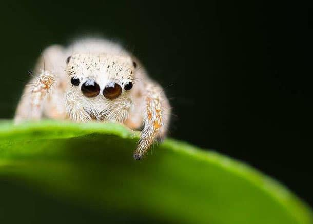Spiders Looking Cute6
