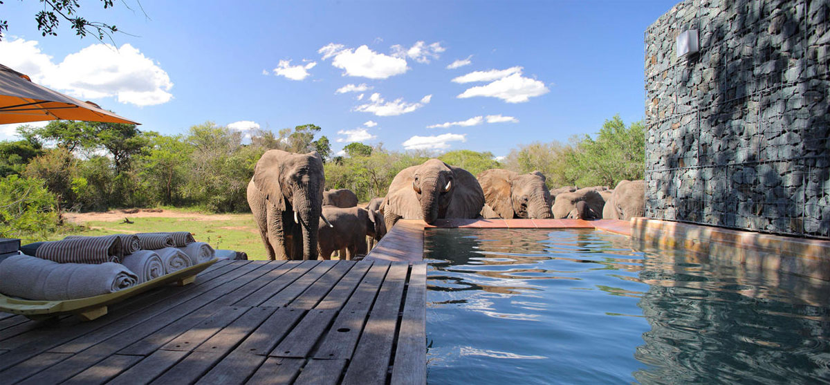 Phinda Homestead elephants, Phinda Homestead, South Africa