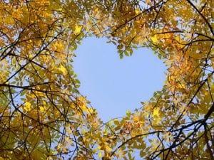 Natural Hearts
