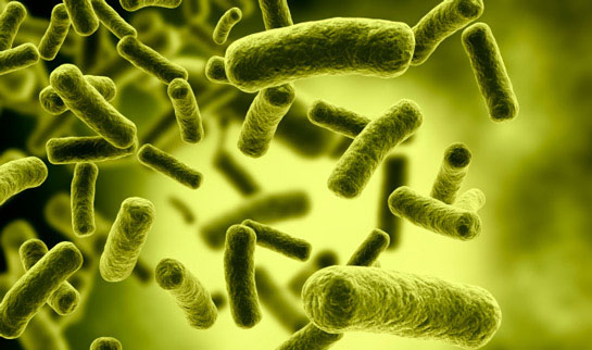 Probiotics - Using probiotic supplementation has been shown to reduce inflammation and boost immunity