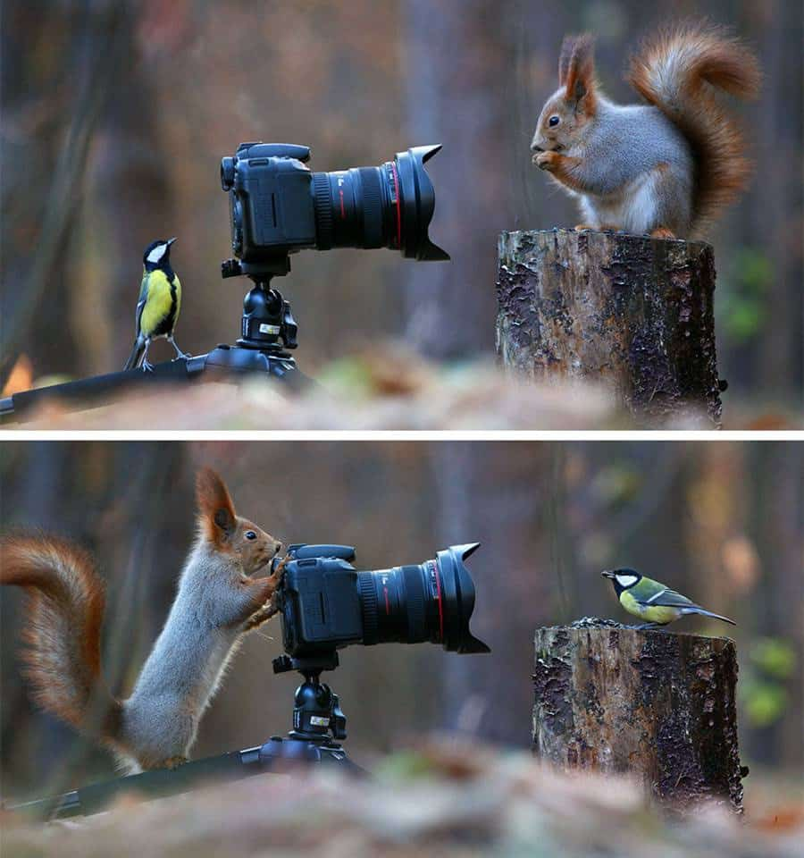 russian-photographer-captures-the-cutest-squirrel-photo-session-ever