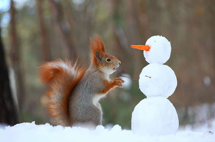 squirrel play with snow