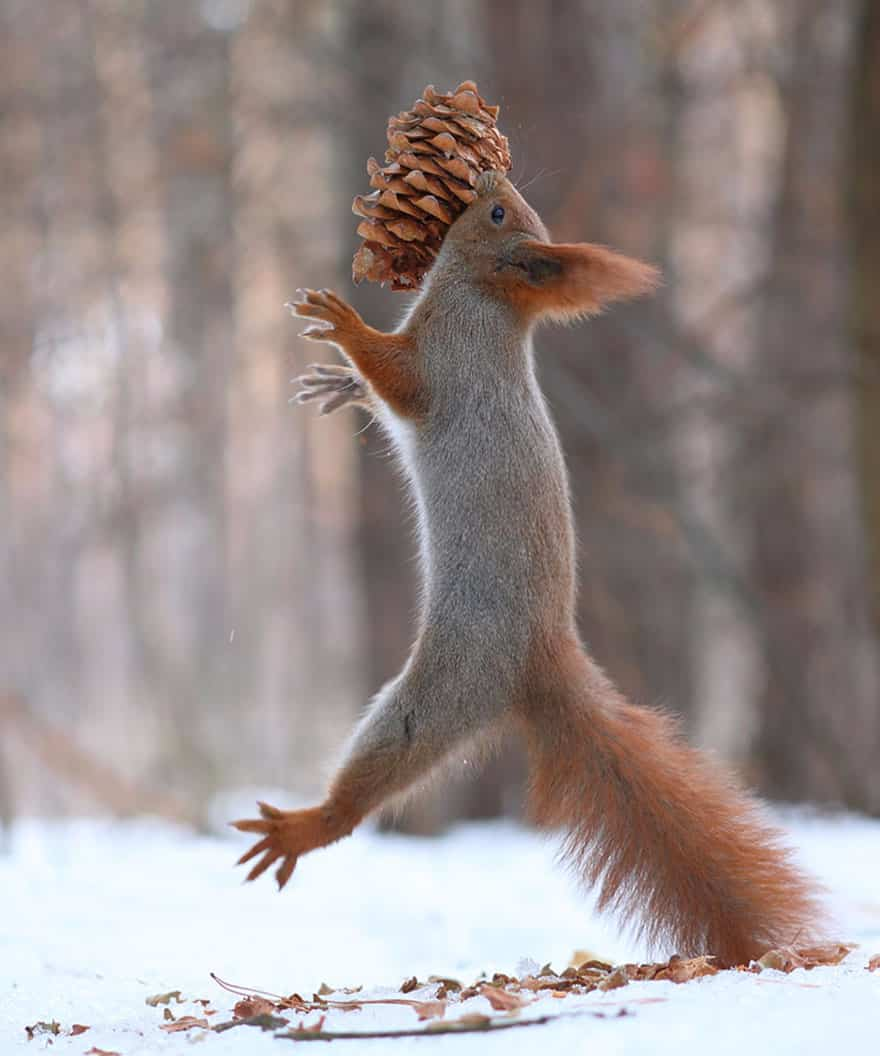 squirrel-playing-on-snow
