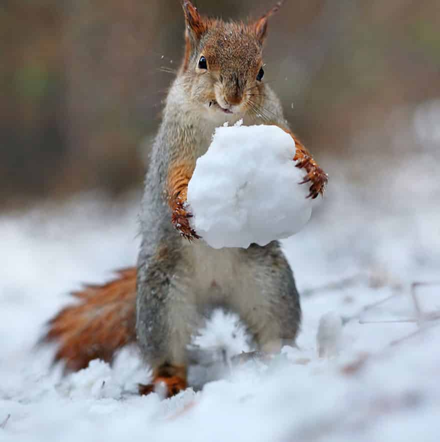 squirrel with snow