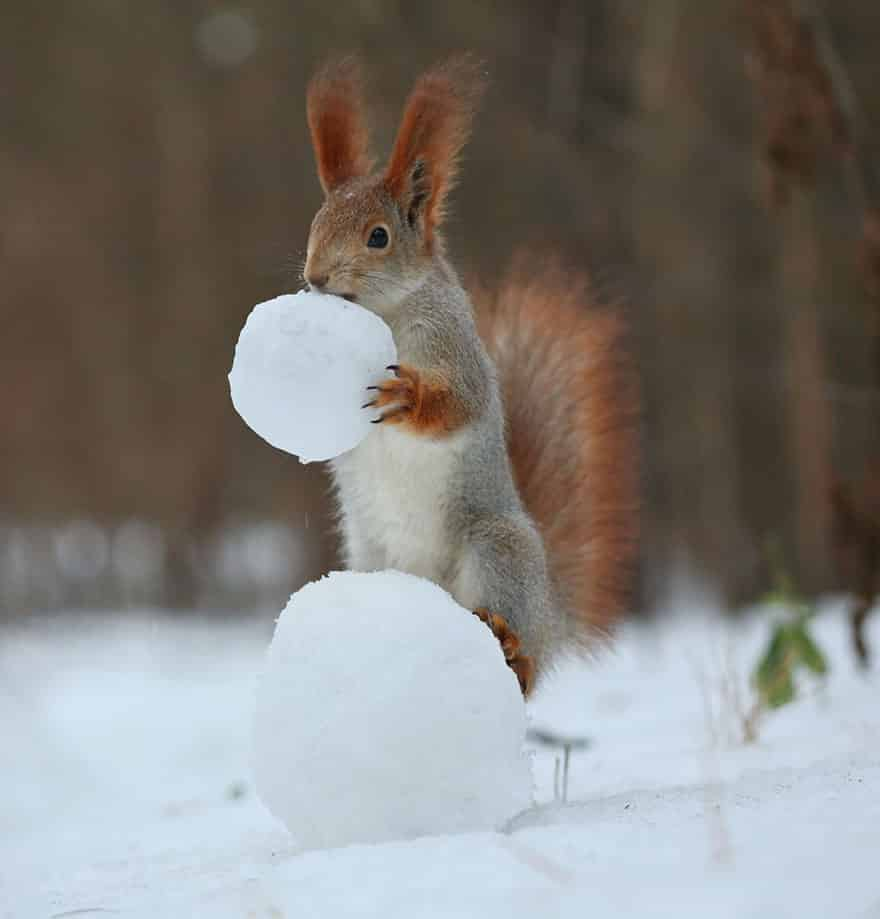 squirrel with snow1