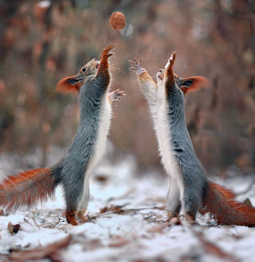squirrels on snow