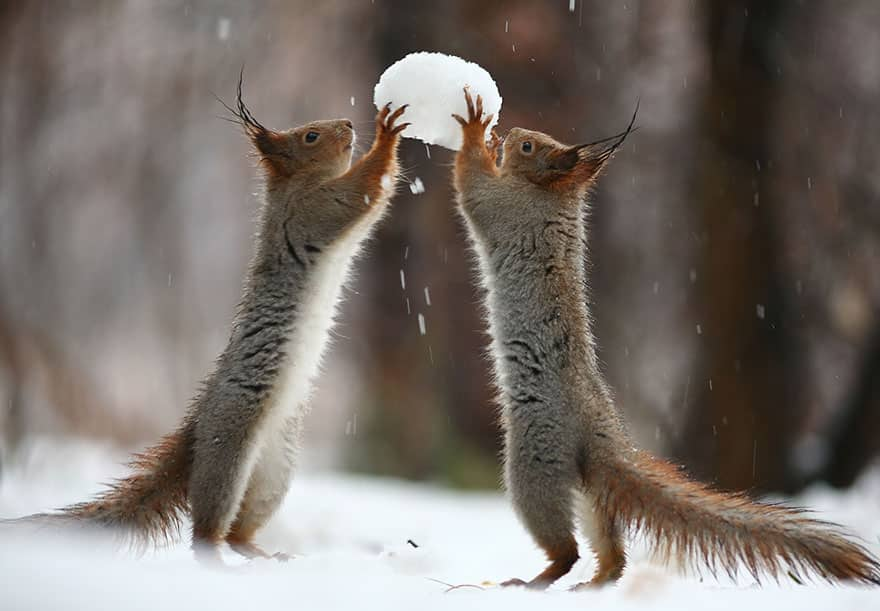 squirrels playing