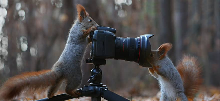 squirrels plays with camera