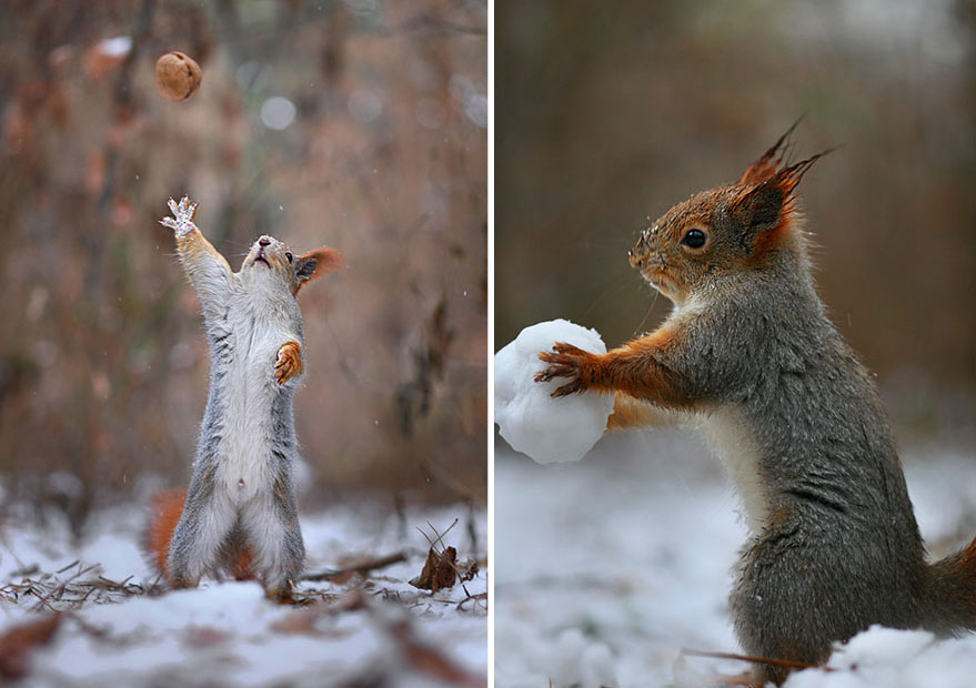 squirrels plays