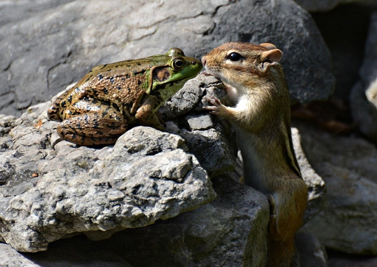 odd couple, a chipmunk and a toad, experiencing a deep sensory connection