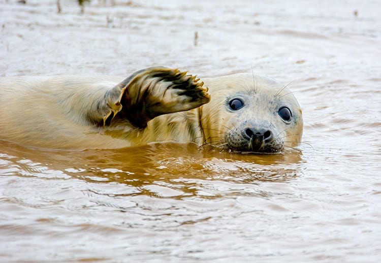 "This seal just saying ""Hey."