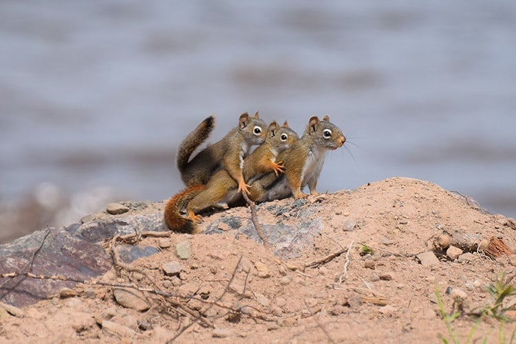 squirrels squirreling it real hard