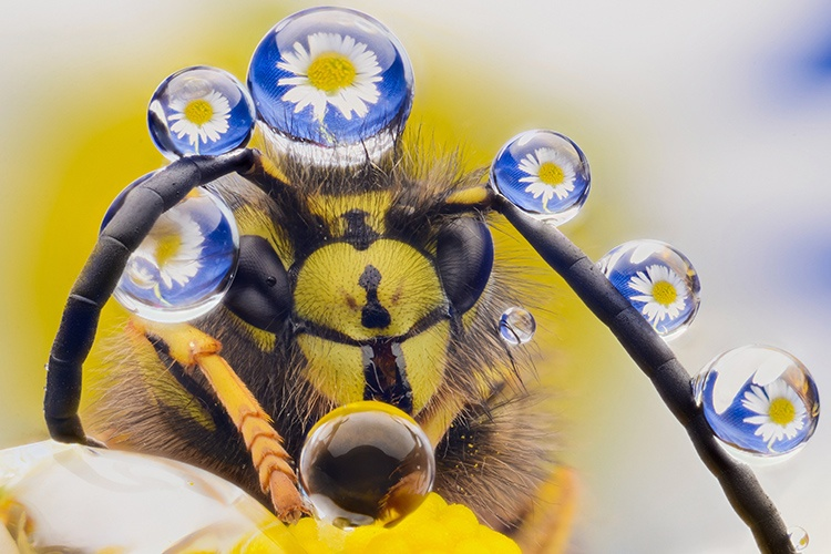 wasp with a fancier jewelry collection than you