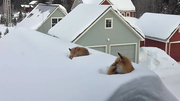 fox family access rooftop snow andy carver