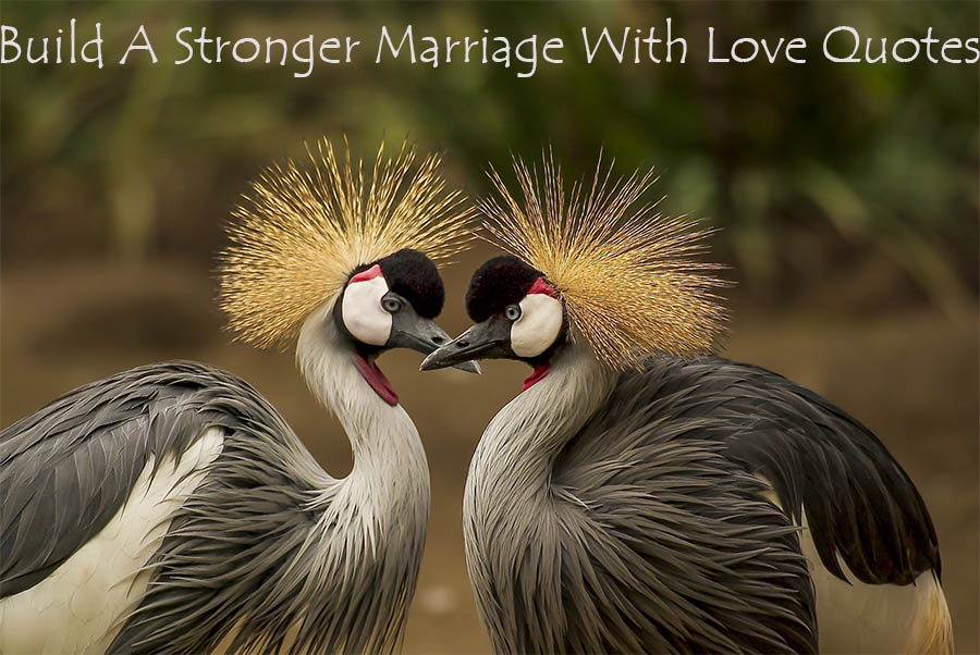 Build A Stronger Marriage With Love Quotes