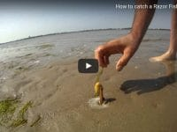 Man Catch A Razor Clam