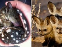 Rare Animal Babies You've Probably Never Seen