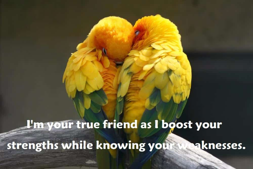 "I'm your true friend as I boost your strengths while knowing your weaknesses."" - 100 Love Quotes To Share"