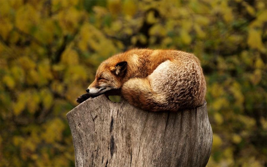 Comfortable Sleeping