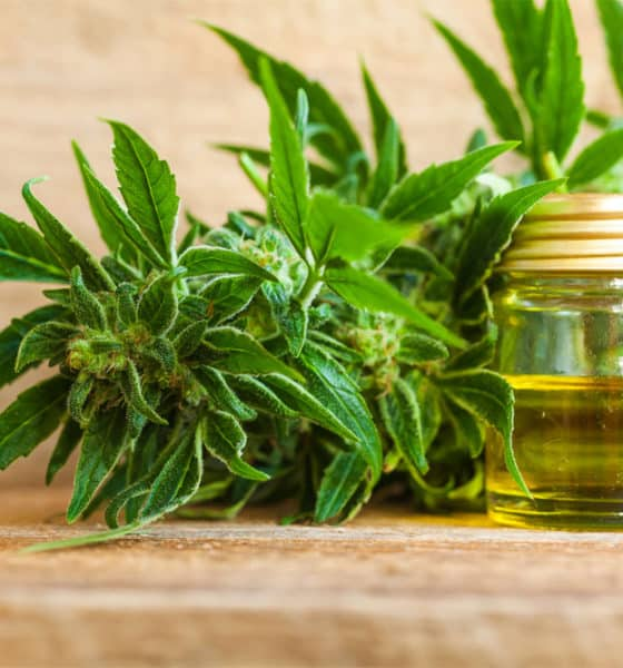 The CBD oil in Charlotte's Web CBD vape pen can help alleviate the pain associated with arthritis and migraines