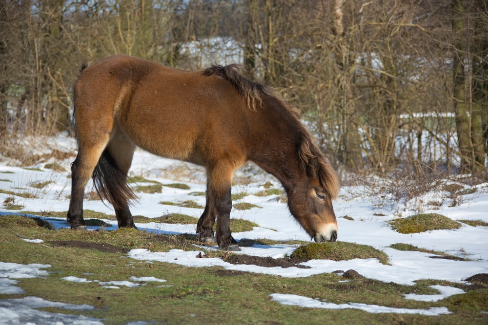 Commonly Endangered Horse