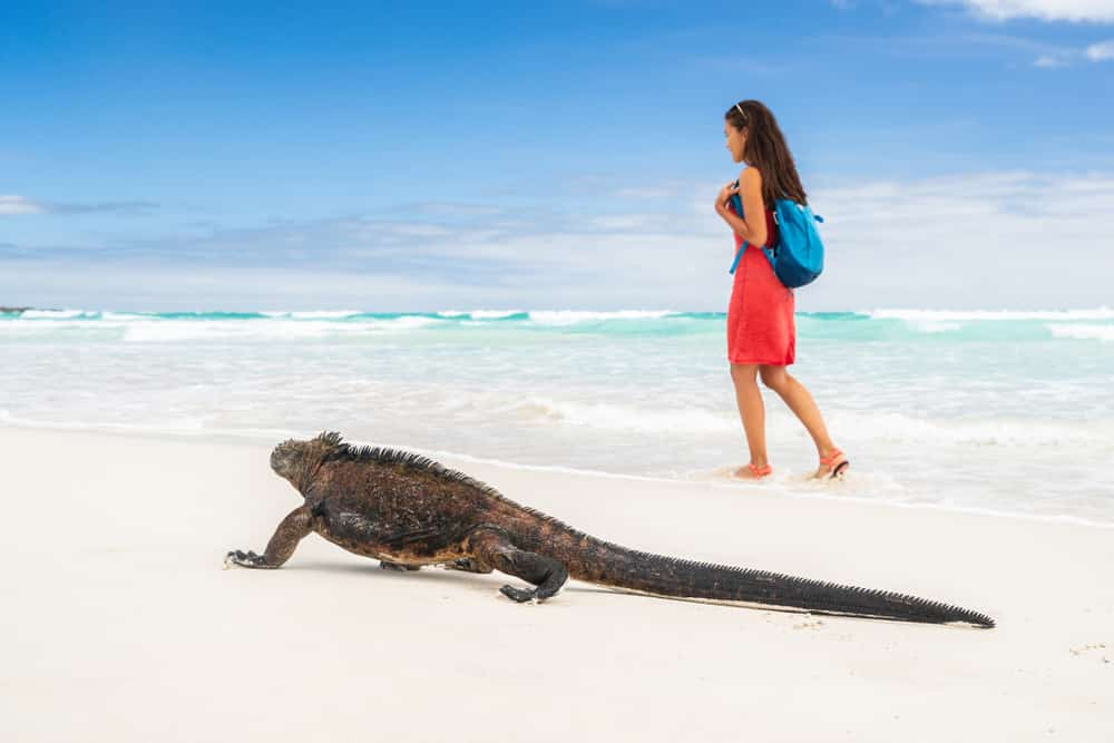 Galapagos, If you are tired of the usual Caribbean or Mediterranean destination, then Galapagos should be next on your list