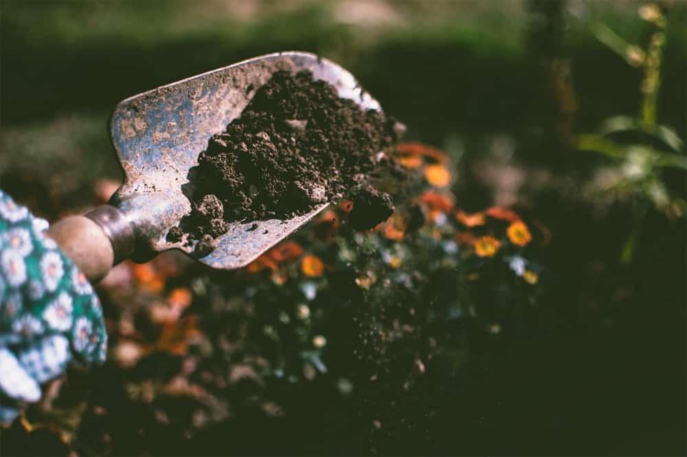 Too much fertilizer Gardening