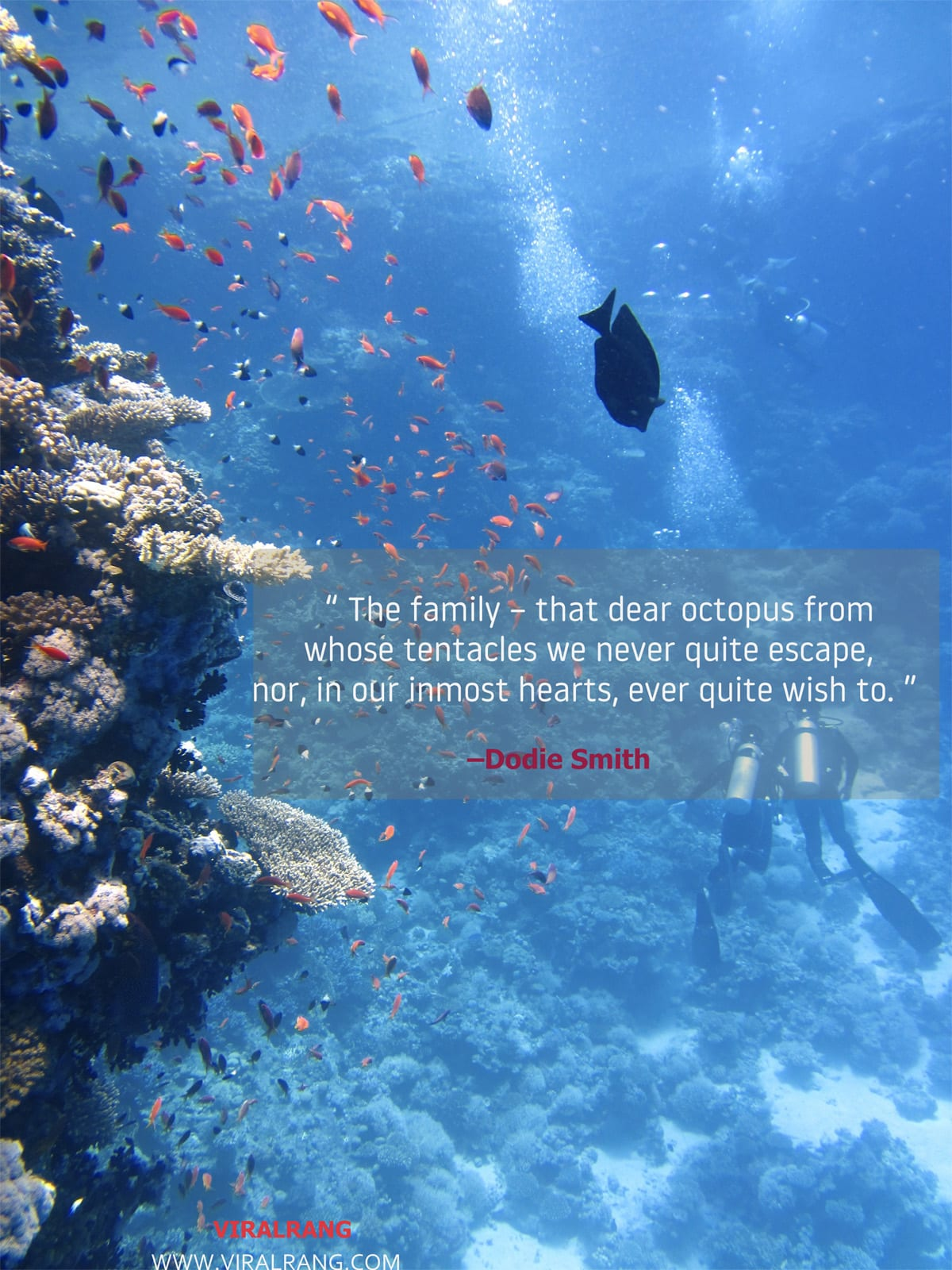 The family – that dear octopus