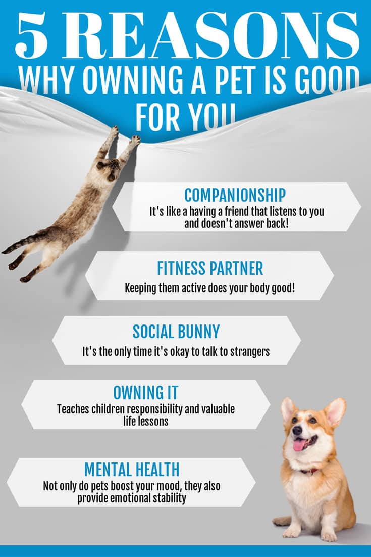 5 reasons why owning a pet