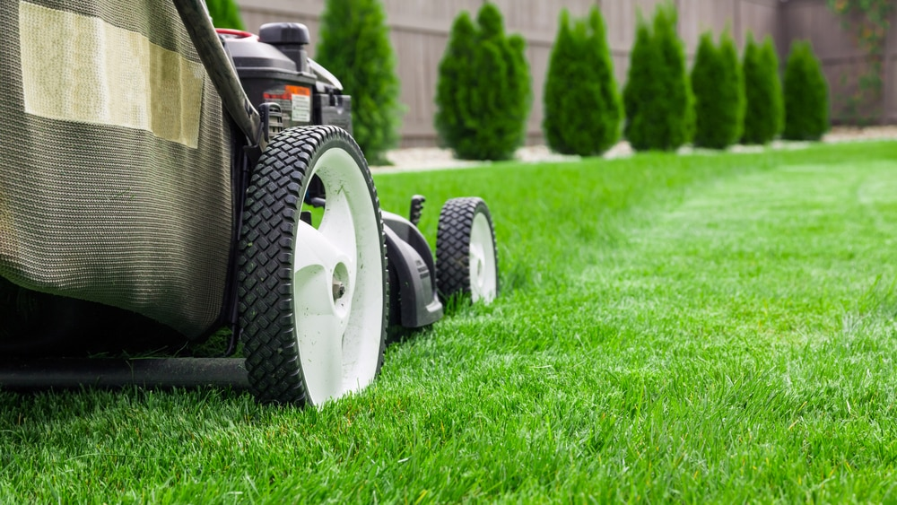 Your Map to Navigating to that Perfect Lawn Care Service