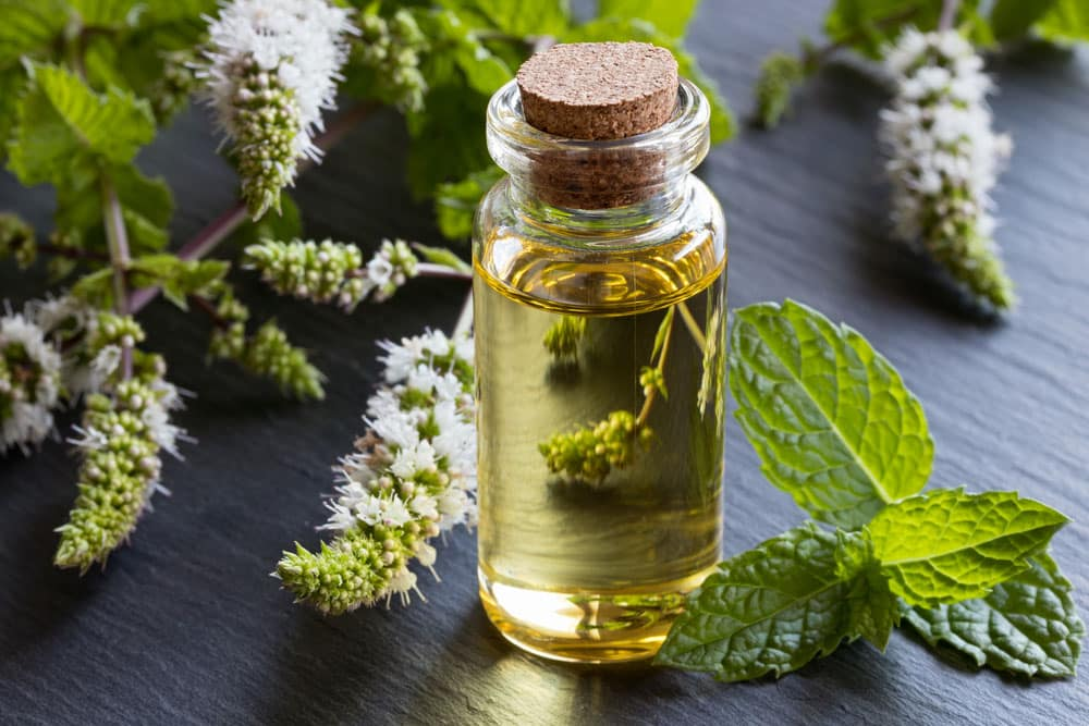 Peppermint Oil, Essential Oils