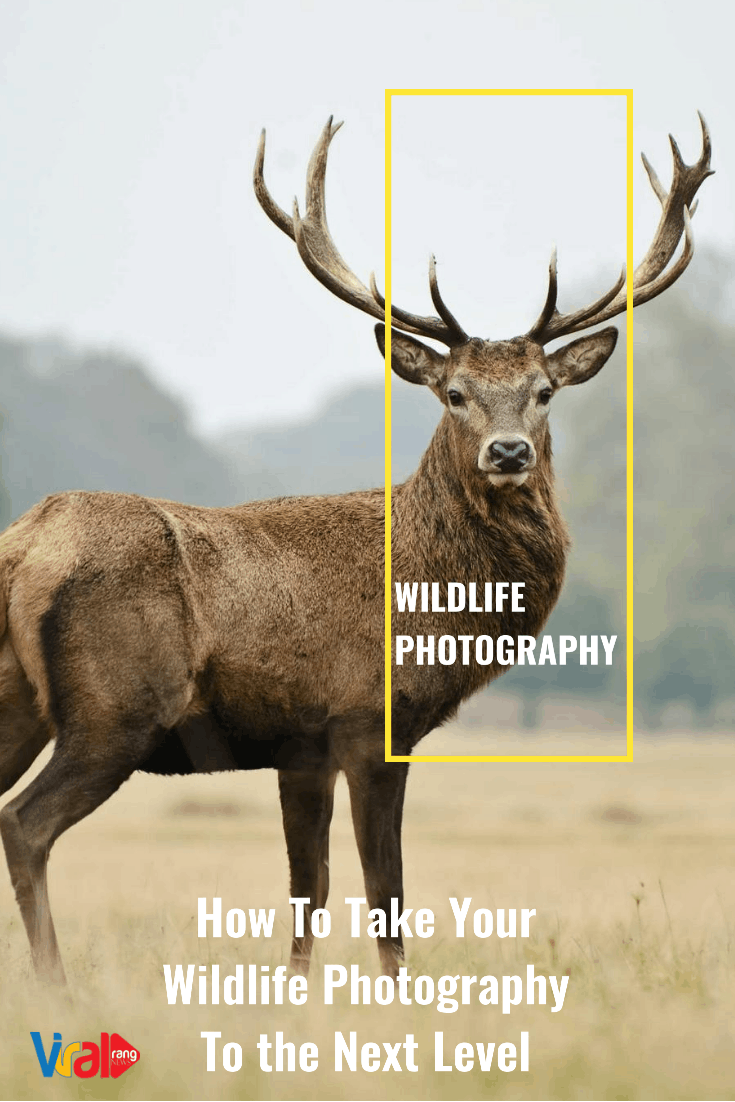 Wildlife Photography To the Next Level