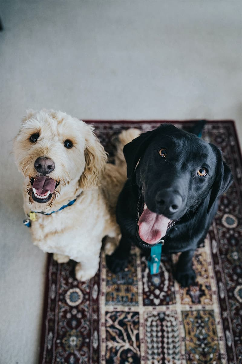 Benefits of Seeing Pets as Family Members