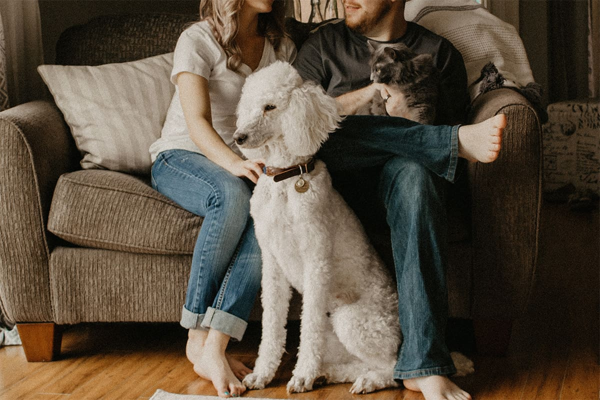 Pets as valued family members