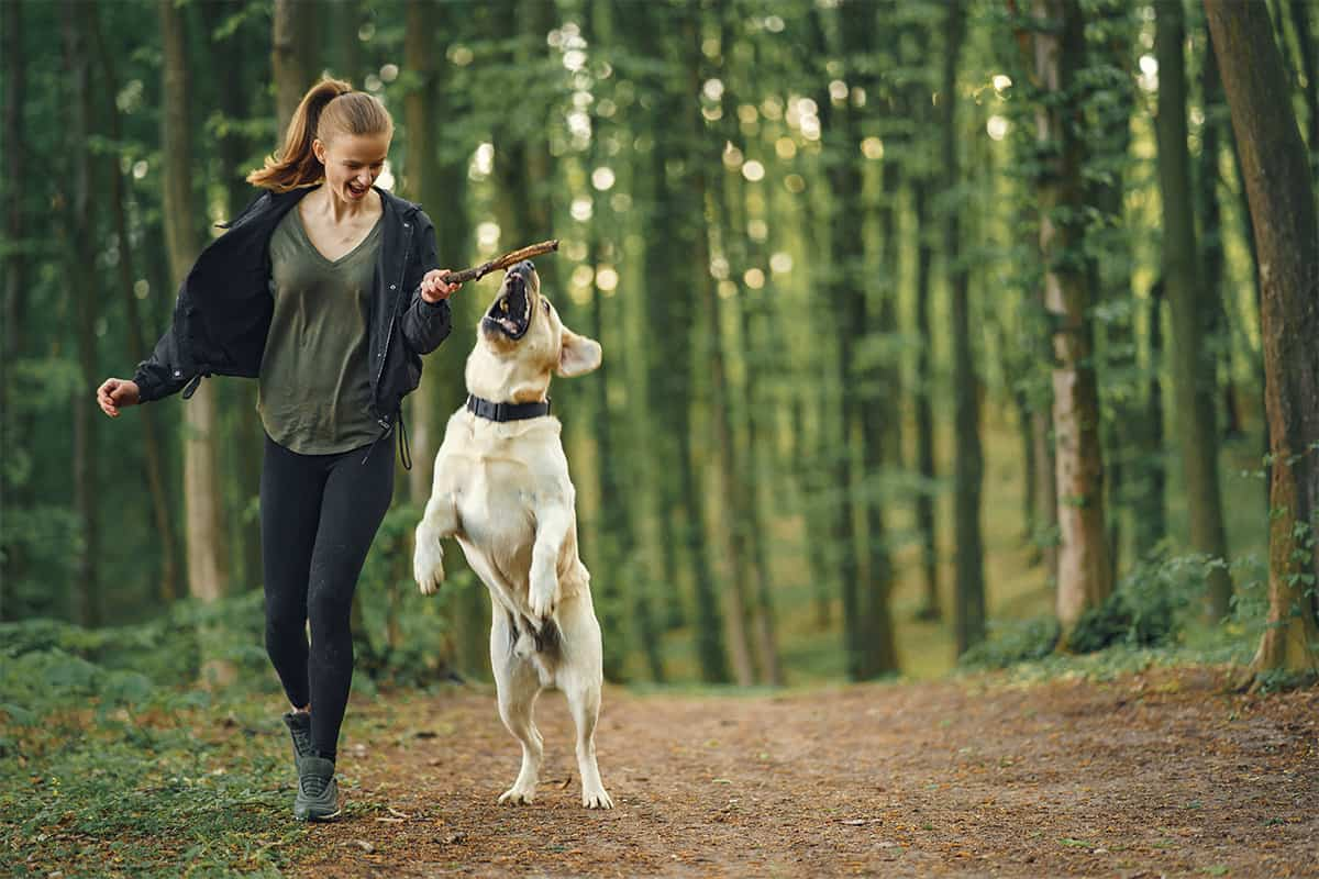 Provide Opportunities to Dog Exercise