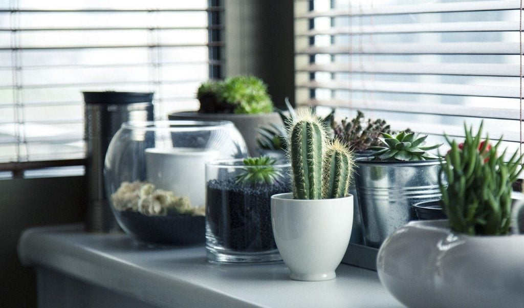 Add Some Plants to your home